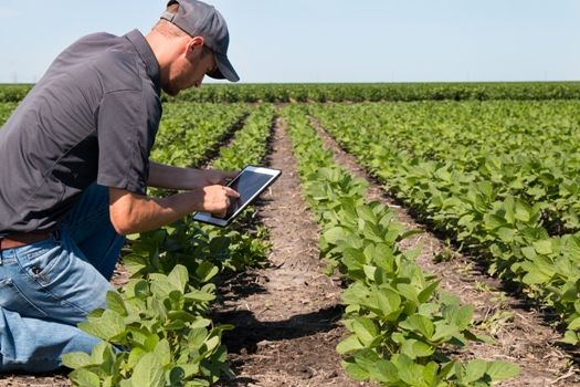 Precision agriculture reports turn aerial images and data into prescriptive actions for farmers.