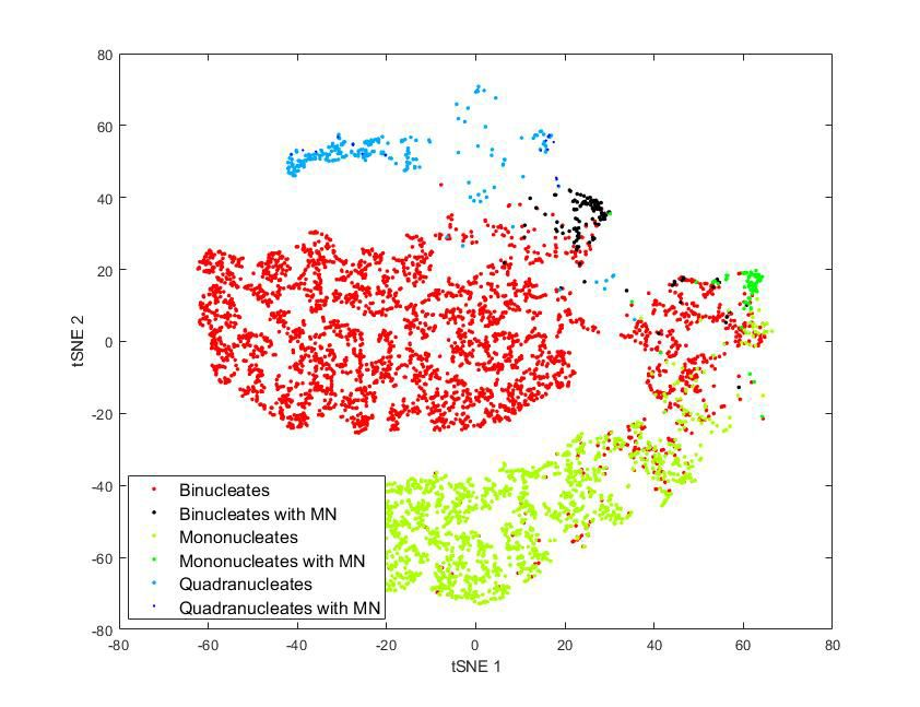 Figure 6. A tSNE visualization of data showing typical cell types from the genotoxicity assay.