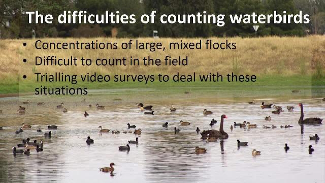 Case study: Advancing Wildlife Research: The Development of a Solution to Process Video Footage of Waterbirds